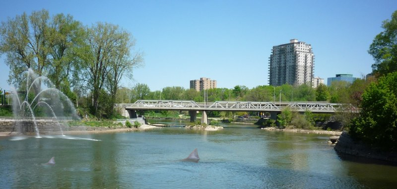 Shark Spotted In Downtown London Ontario